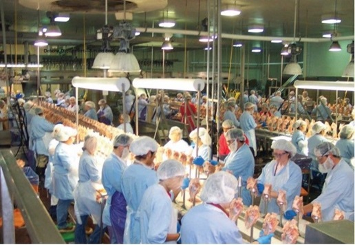 Workers in PPE stand close together on a poultry processing line